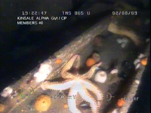 The offshore structures have become a habitat for marine life