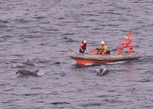 Bottlenose Dolphins Bow Riding a Rescue Launch on exercise near Alpha